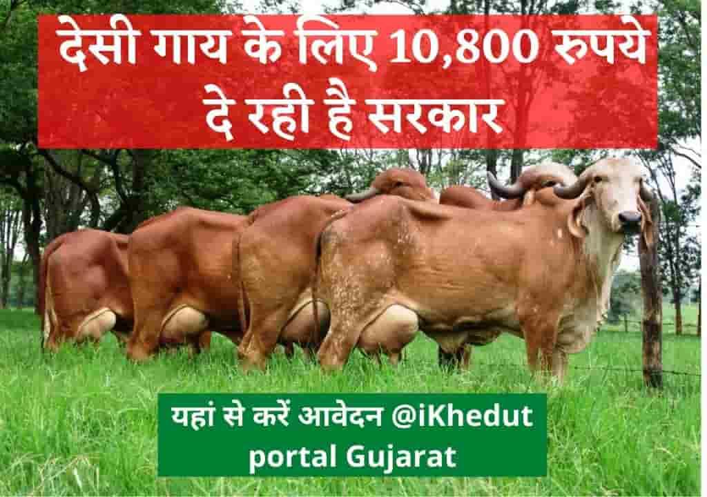 देसी गाय के लिए 10,800 रुपये दे रही है सरकार, यहां से करें आवेदन @iKhedut portal Gujarat